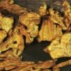 Bravura Ventures signs property agreement with Golden Predator
