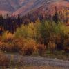 Endurance Identifies Four Chargeability Anomalies On The Elephant Property, Alaska