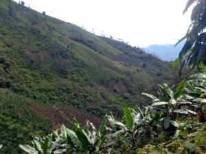 The joint ventured Cascabel copper-gold porphyry joint venture exploration project in northern Ecuador. Source: Cornerstone Capital Resources Inc.