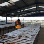 Orla Mining announces $75 million bought deal